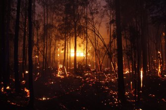 Photographs shows burning properties in Rainbow Flat on Friday night after fire from the Hillville Fire broke containment lines and crossed the Pacific Highway.