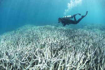 Increasingly frequent bleaching events are occurring too close together and corals don't have enough time to recover.