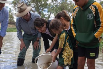 Premier Gladys Berejiklian visited Menindee as the first Murray cod were returned to the Darling River.