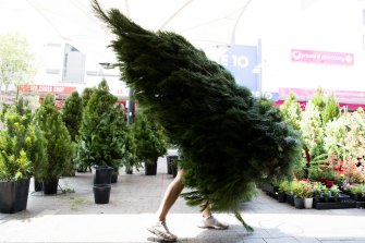 Christmas trees for sale in Oxford Street, Bondi Junction.