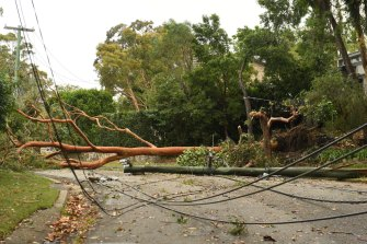 Ausgrid is responding to more than 1500 hazards on the network.