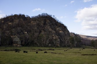 Cattle graze on a farm near the Wollemi National Park, which is near areas the NSW government has earmarked for coal mine exploration.