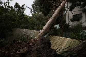 A fallen tree branch on Merrima Street in Gordon on Tuesday. Some residents remained without power until the weekend.