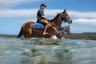 Trainer Matt Dale has five-year-old Sebago in a class 2 (1207m) at the Sapphire Coast.