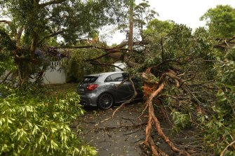 Storm damage in Davidson, in Sydney's north.