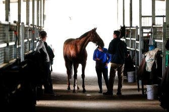 Kings Will Dream, pictured ahead of last year's Caulfield Cup.
