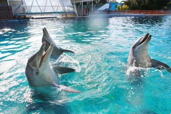 Three dolphins, Jett, Zippy and Bella, remain at Dolphin Marine Conservation Park.