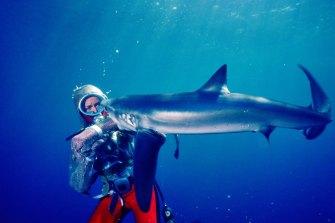 Valerie Taylor swims with a shark.