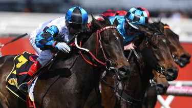Jockey Craig Williams rides Amphitrite to victory in the Thousand Guineas at Caulfield Racecourse.