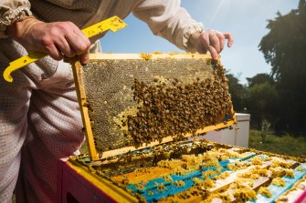 Professional beekeepers will be allowed to continue working from Queensland national parks for 20 more years.