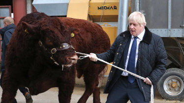 British Prime Minister Boris Johnson leads a bull around a pen as he visits Darnford Farm in Banchory near Aberdeen, Scotland, on Friday.