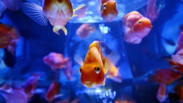 How fish tanks could help hackers access your home