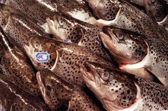 Global demand for Atlantic salmon is growing.
