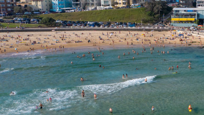 'False sense of security': Council calls for removal of shark nets at Bondi Beach