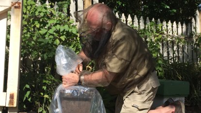 Hundreds of Brisbane water meter boxes carry extra sting for residents