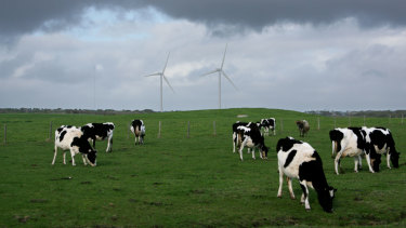 Methane from cows are the biggest contributor to agriculture's contribution to global warming.