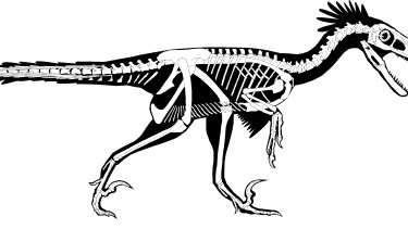 Researchers believe the dinosaur had a long, flexible tail and strong arms and hands.