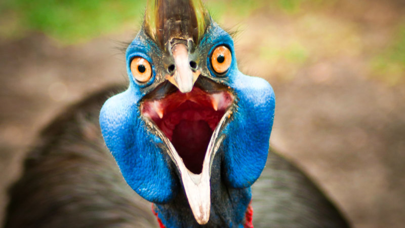 Cassowary Mystery Cracked Nature Gifts Giant Bird An