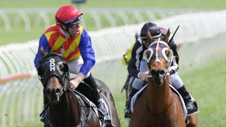 For a mate: Tommy Berry in Greg Hickman's silks enjoys the win on Pierata in the Sydney Stakes.
