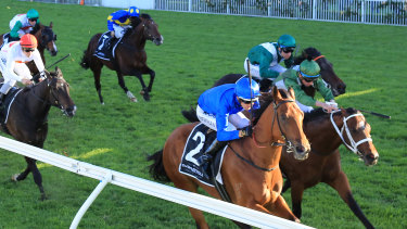 Bivouac on the rails and Yes Yes Yes square off in the finish of the Golden Rose.
