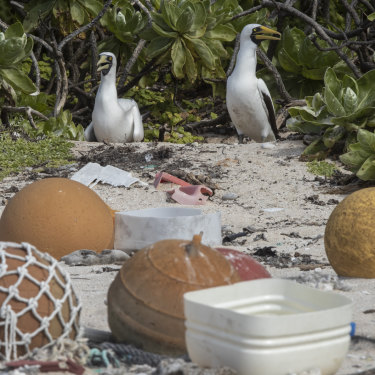 Seabirds nest in new rubbish on the island.