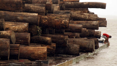 A man is seen on a raft loaded with confiscated logs that were illegally cut from the Amazon rain forest.
