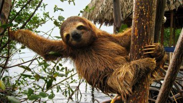 A sloth not heading to the Supreme Court.