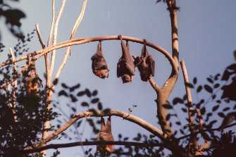 """The WHO said the novel coronavirus """"most likely has its ecological reservoir in bats""""."""