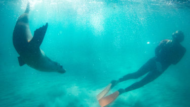 The Australian sea lion has already had its assessment delayed from last September.