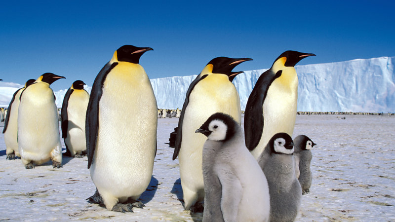 'It was only us and the penguins': Why a BBC crew broke a wildlife filmmaking taboo