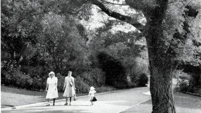 La Trobe's time-travelling tree