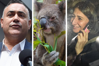 Caught in the middle: Koalas almost blew up relations between John Barilaro and Gladys Berejiklian twice in a matter of months.