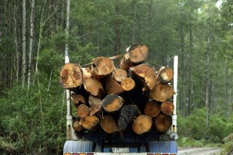 Old growth logging is being phased out.
