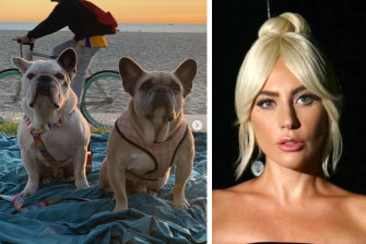 The two bulldogs belonging to Lady Gaga.
