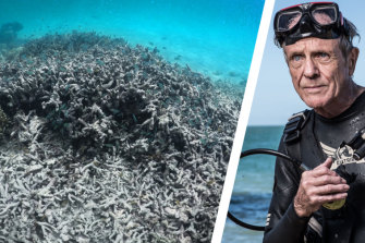 """Charlie Veron, the """"Godfather of Coral"""", right, and dead Staghorncoral."""