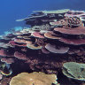 Great Barrier Reef gets tick for coral regrowth but factors behind decline 'getting worse'
