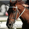 Randwick runners can get industry back on track after murder and mayhem