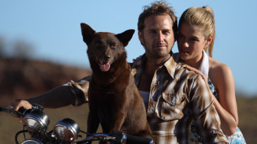 Koko with Josh Lucas and Rachael Taylor in Red Dog.