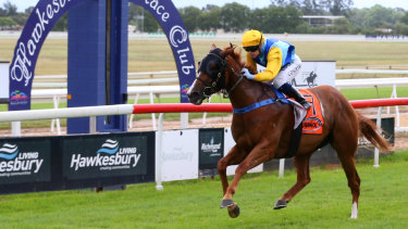 Tough test: Captain Courageous is among several well-credentialed rivals for Happy Bubbles in the sixth at Hawkesbury.