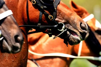 Plenty of Canberra horses will make the short trip to Queanbeyan on Monday.