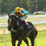 Diamond Thunder chasing hat-trick with a view to Brisbane summer