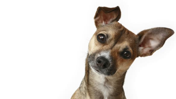 Can you really 'be the person your dog thinks you are'?