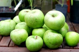 Granny Smiths, first developed by Maria Smith in Ryde in 1868, are one of the world's favourites.