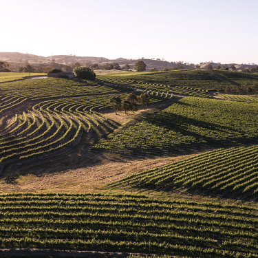 Pewsey Vale specialises in making riesling – and lots of it.