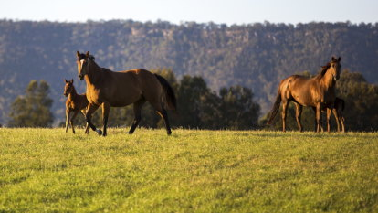 Confirmed case of deadly Hendra virus in Hunter Valley