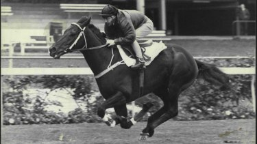 Attempted comeback: plans for Kingston Town to return to the track were aborted in 1985.