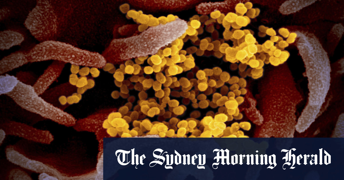 Scientists discover many people unexposed to coronavirus have immune cells for COVID-19 – Sydney Morning Herald