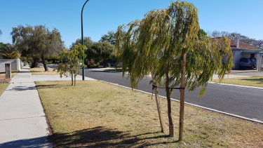 Councils across Perth are scrambling to fill every sun-blazed gap with street trees.