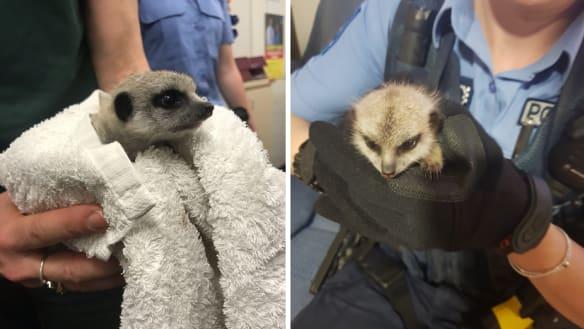 Salama was rescued by Kensington Police.