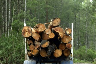 The plan includes an immediate ban on old-growth forest logging.